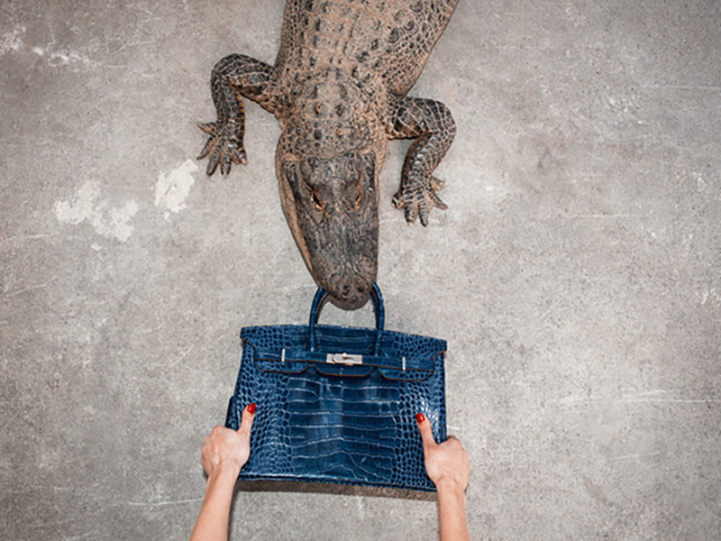 gator-birkin3